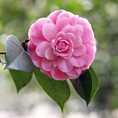 LA Blooms