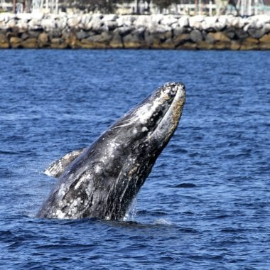 Whale Watching at Dana Point