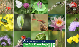 Neighborhood Science Tuesdays: Biodiversity in Los Angeles