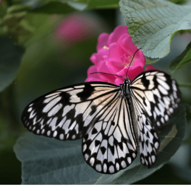 Butterflies at South Coast Botanic
