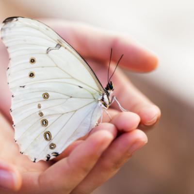 BioBlitz L.A.: Help Preserve Wildlife and Habitats