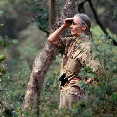 """""""Becoming Jane: The Evolution of Dr. Jane Goodall"""" Exhibit"""