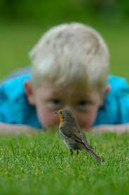 Family Nature Club - Birds