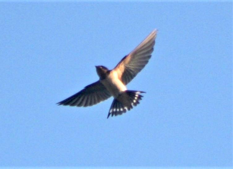 Birding Opportunity