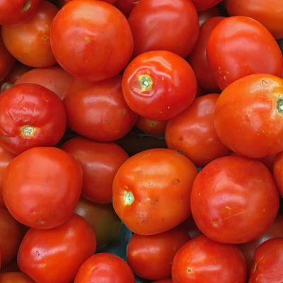Pick Your Own Roma Tomatoes