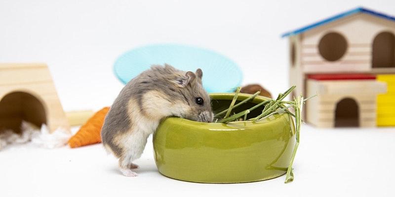 Wellness Workshop: Critter Care