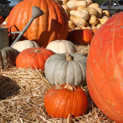 Irvine Park Railroad's Pumpkin Patch